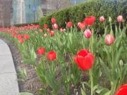 Flowers near Campus Martius